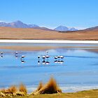Flamingos - Salar Laguna amongst Volcanos, Uyuni by Honor Kyne