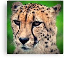 Mean Cheetah Canvas Print