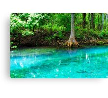 Clearwater at Silver Springs Canvas Print