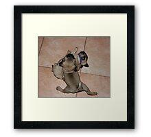 Pug Splits Framed Print