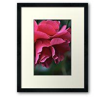 Camellia Pink Framed Print