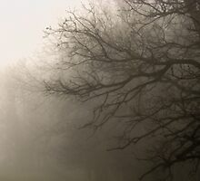 Into the mist by wespridgeon