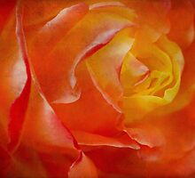 Passionate rose by Celeste Mookherjee