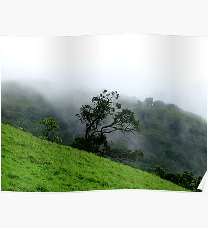 A tree highlighted by mist Poster