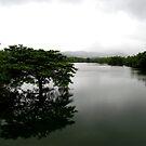 A lonely tree in a lake by Shiju Sugunan