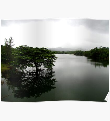 A lonely tree in a lake Poster