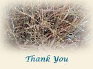 Thank You - Ornamental Grasses by MotherNature
