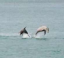 Synchronized Swimming by Julia Harwood