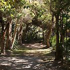 Pathway #2 by Rob Walmsley-Evans by Access Arts Camera Wonderers