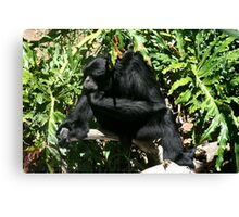 Ape Thinking - Adelaide Zoo - South Australia Canvas Print