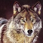 Grey Wolf by ellenspaintings