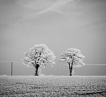 Rime Frost by MattD