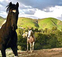 Black n White Tobiano Paint & Arab horse by Debra Thomas