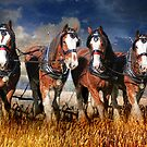 Love Of The Land -The Working Horse by Trudi's Images