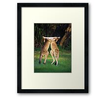 Roo Fight! Framed Print