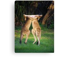 Roo Fight! Canvas Print