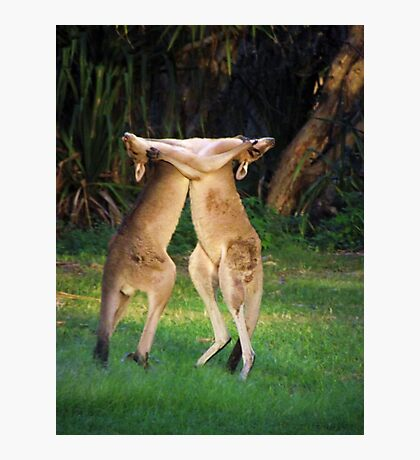 Roo Fight! Photographic Print