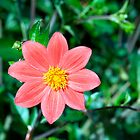 Flower by Paris Franz