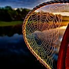 Dawn&#x27;s Web by Kathy Weaver