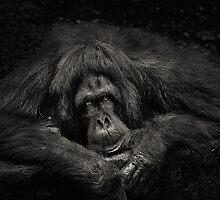 Sabah Orang-utan - Borneo by Dean Mullin