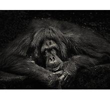 Sabah Orang-utan - Borneo Photographic Print