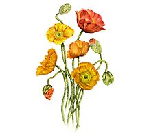 Bouquet of poppy flowers Photographic Print