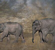 The Elephant Walk by almaalice