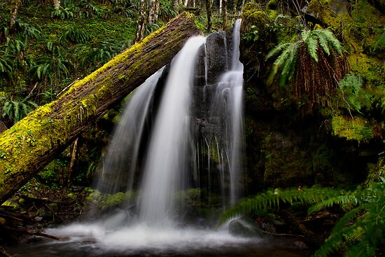 A Place To Rest ~ Upper Quartzville Creek ~ by Charles & Patricia   Harkins ~ Picture Oregon