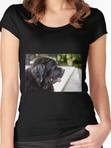 large black Newfoundland dog Women's Fitted Scoop T-Shirt