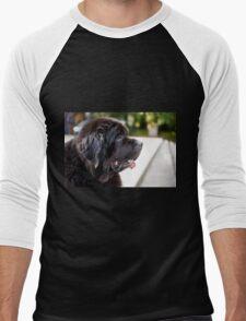 large black Newfoundland dog Men's Baseball ¾ T-Shirt