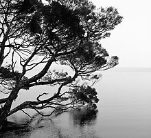 Misty Dawn on Sarah Island by Michael Bailey