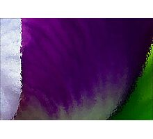 Iris Macro Tricolor Photographic Print