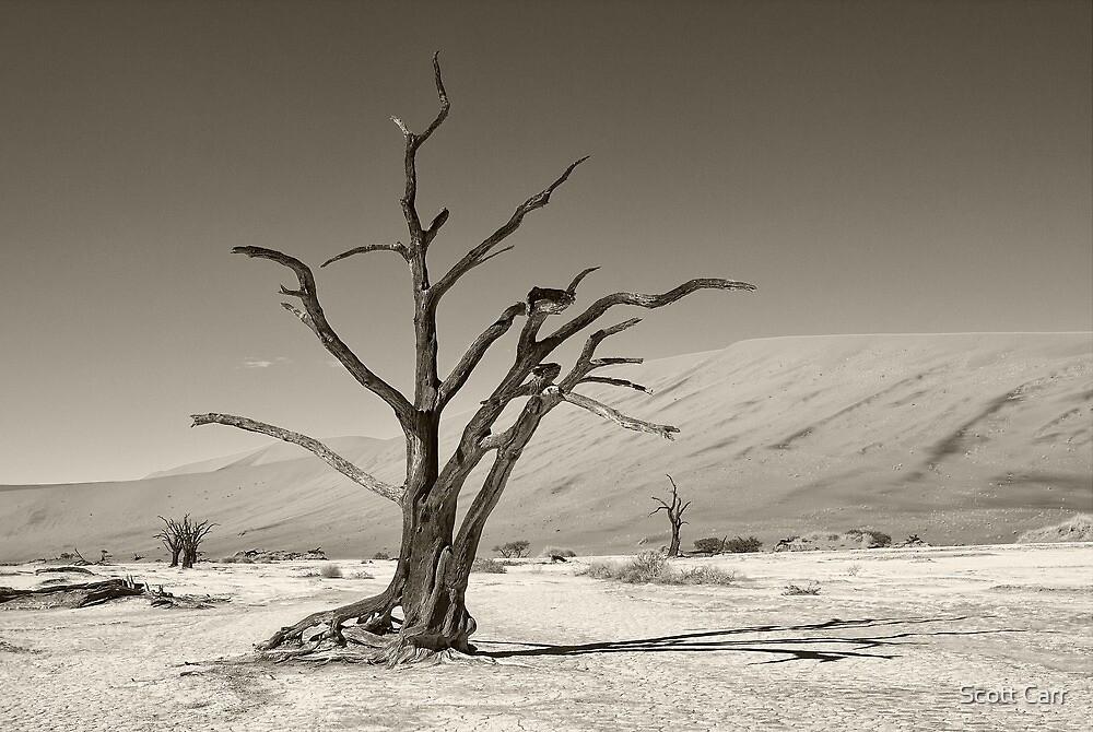 Dry As a Bone by Scott Carr