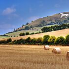 Westbury White Horse in Summer by David Jacks