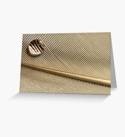 Dewdrop on Quill Feather Greeting Card