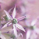 Allium pastels by IngeHG