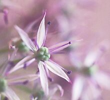 Allium pastels by IngeHG