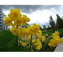 Daffy and Happy! Photographic Print