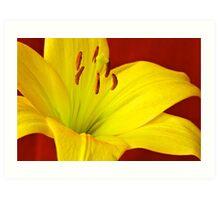 Yellow Lily Art Print
