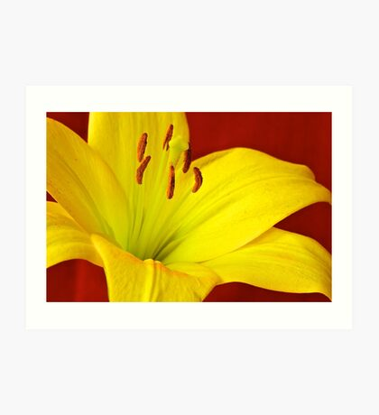 Yellow Lily Art Print
