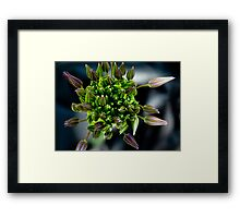 Cozy Buds Framed Print