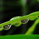 four drops by amar singh