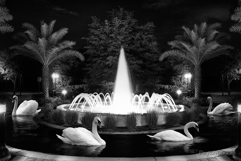 Swan Fountain by Peyton Duncan