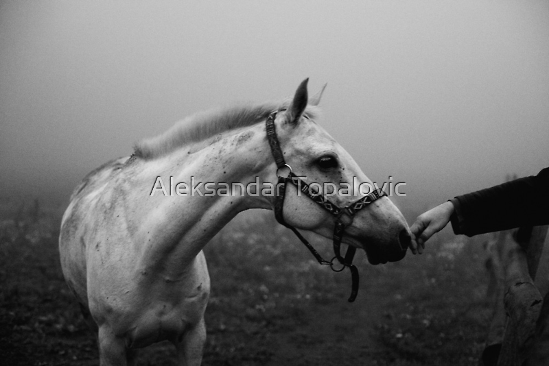 Tara Mountin - Trust by Aleksandar Topalovic