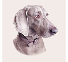 Pet Portraits by Steph Dix by StephDix