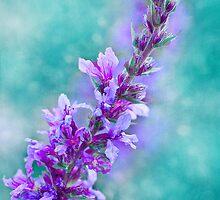 Lavender by ♛ VIAINA