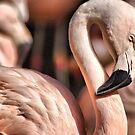 Flamingo curves by loiteke