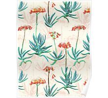 Flowering Succulent Pattern in Cream, Coral and Green Poster