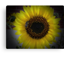 Sunflower bumble Bee 01 Canvas Print