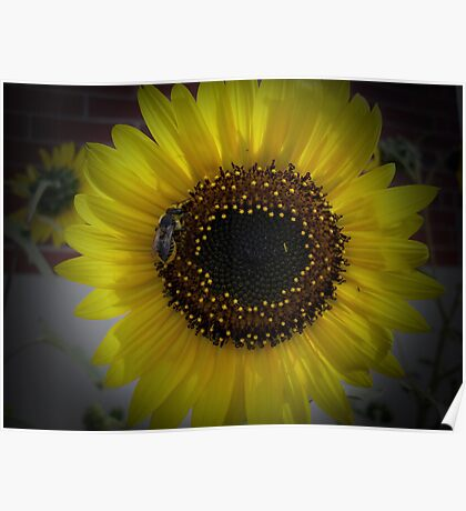 Sunflower bumble Bee 01 Poster